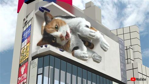 クロス新宿ビジョン 3D 猫 巨大ネコ 無重力 猫ちゃんねる