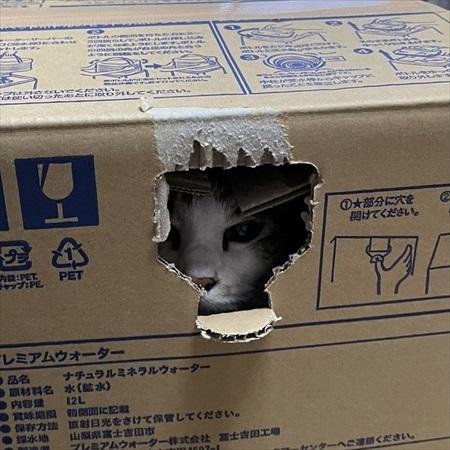 段ボールで運ばれる猫ちゃん