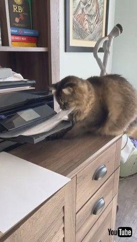 「Printing Paper Keeps Kitty Occupied || ViralHog」