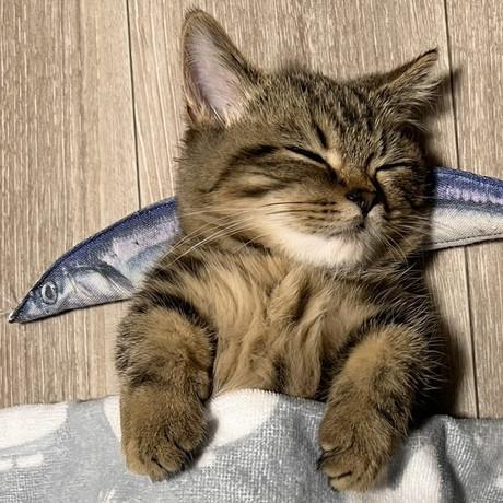 魚枕でスヤスヤチョパえもんくん