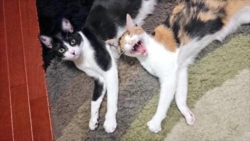 猫を甘くみてはいけない
