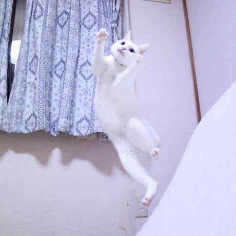 ぷるちゃんとリリーちゃんの空中戦