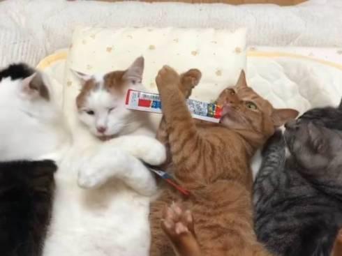 猫 セルフちゅ〜る