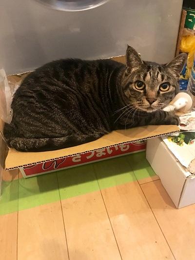 7キロの猫