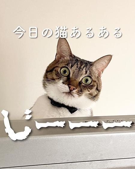 今日の猫あるある1