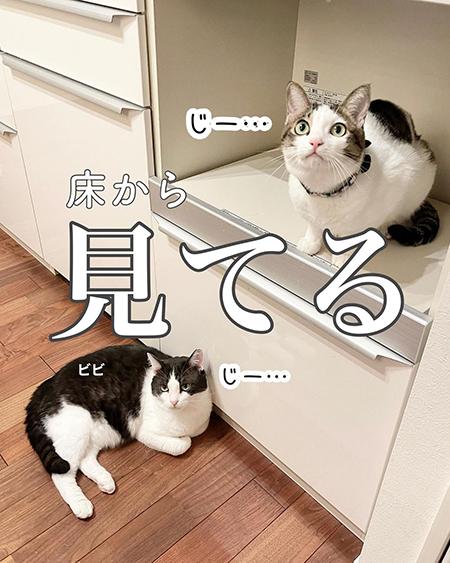 今日の猫あるある3