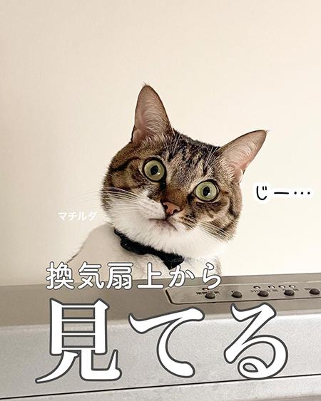 今日の猫あるある5
