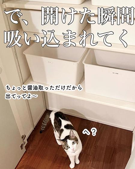 今日の猫あるある8