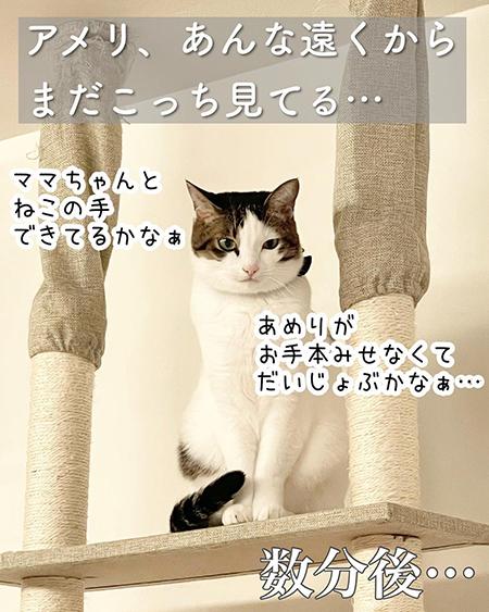 今日の猫あるある9