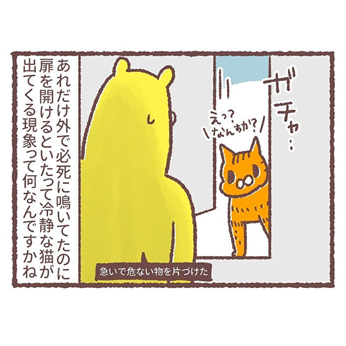 急に冷静になる猫5
