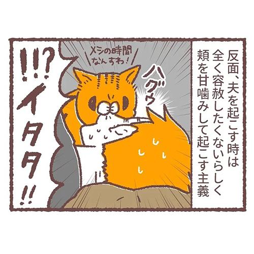 猫の起こし方の差5
