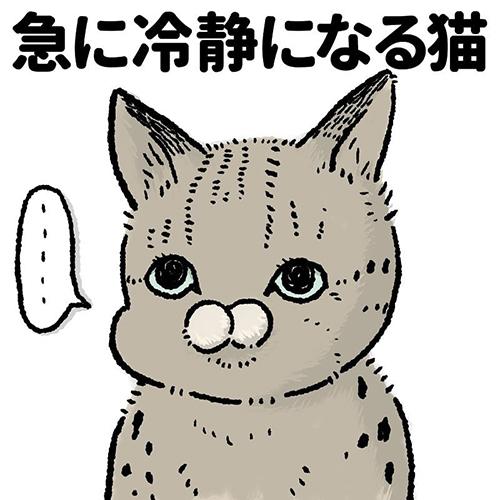 急に冷静になる猫1