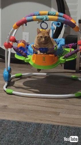 「Cat Curls Up in Baby Bouncer || ViralHog」