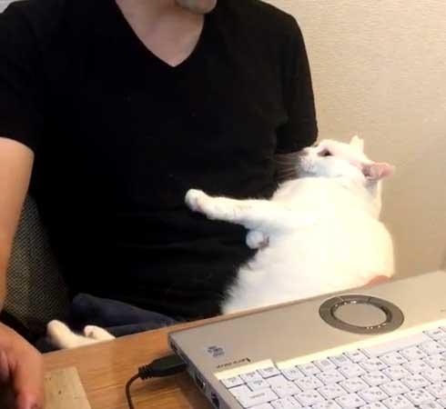 夫を信用しきってる 猫 甘える 体を預ける ゴロン