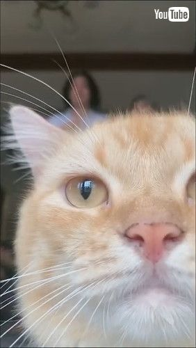「Cute Cat Steals Spotlight    ViralHog」