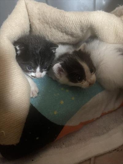 ボンネットから救出された子猫
