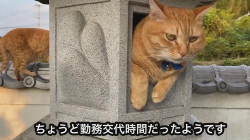 灯ろうで見張りをするネコちゃん