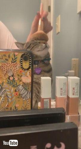 「Pretty Kitty's Makeup Routine    ViralHog」