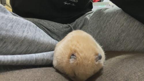 キンクマのかわいすぎる寝落ち