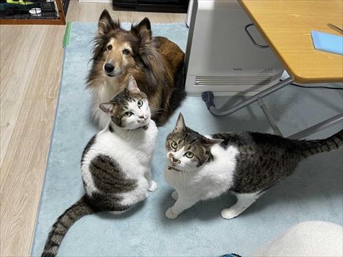 全猫飼いさんが共感する猫あるある