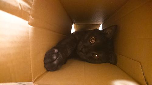 箱に入ってご満悦なヤマトくん