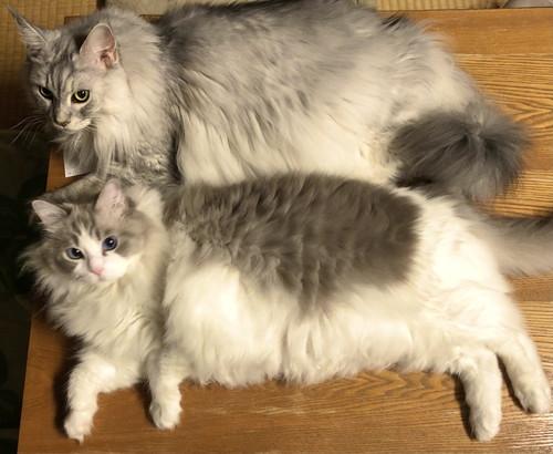 ネコちゃんたち