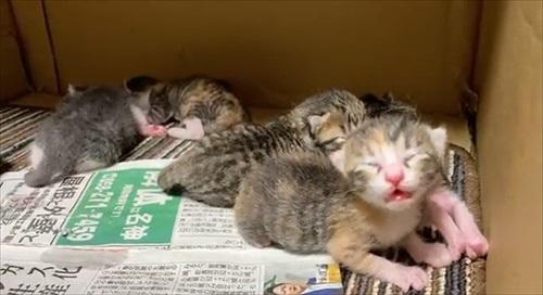 朝起きたら猫の出産完了していた