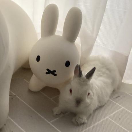 ブルーナボンボンとウサギさん