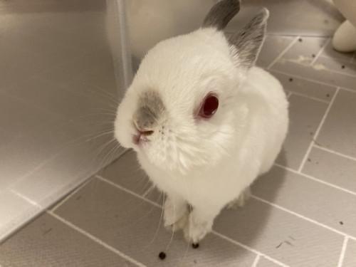 ウサギさんたち