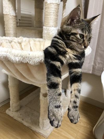 態度がデカイ猫
