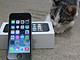 週末アップルPickUp!:iPhone 5sと195匹の猫