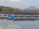 池に浮くメガソーラー、今後1年以内に10カ所に建設