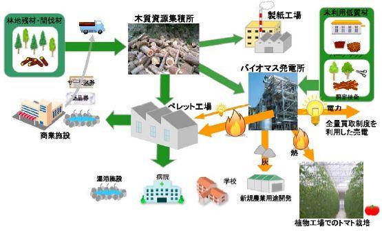 seki_biomas.jpg