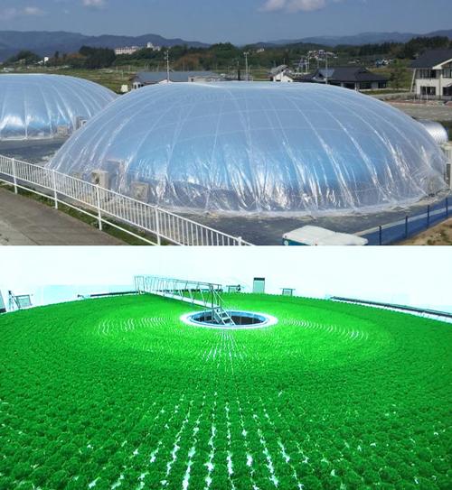 Minami_Soma_Solar_Agri_Park_3.jpg