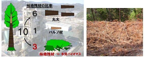 kochi_biomas1_sj.jpg