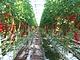 オランダ型システムとガスエンジン、農業に必要な3つの要素を満たす