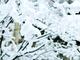 エアコンを使わないデータセンター、青森の雪でPUE1.2クラスの超省エネを実現