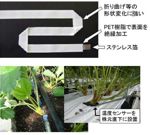rk_151208_ichigo02.jpg