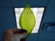 光合成する「人工の葉」、絹タンパク質に葉緑体を取り込む