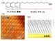 有機単層結晶薄膜の電荷分離の様子を明らかに、太陽電池の高効率化に応用へ
