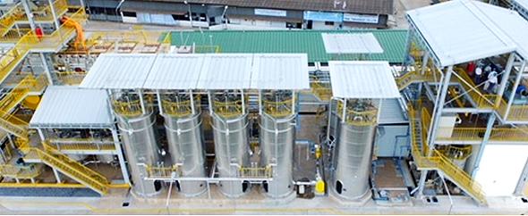 サトウキビの搾りカスでバイオ燃料の原料生産、タイに世界最大級の実証 ...