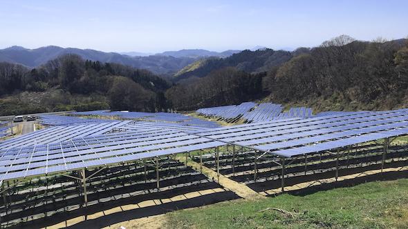 パネルの下で「しきみ」を栽培、四国最大級のソーラーシェアリング ...