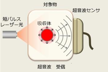 フィルム状の超音波圧電振動子 出典:科学技術振興機構