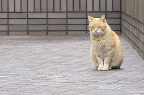 芝浦一丁目の猫